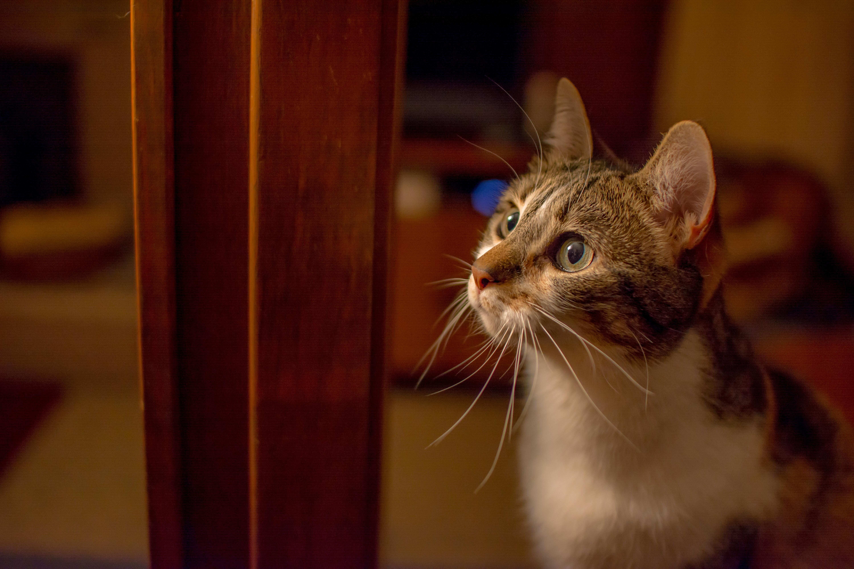 猫の脳腫瘍、その症状とは?