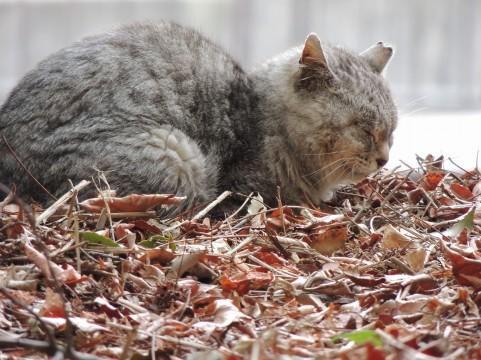 「祖先の残した本能」猫がネズミを捕食するワケ