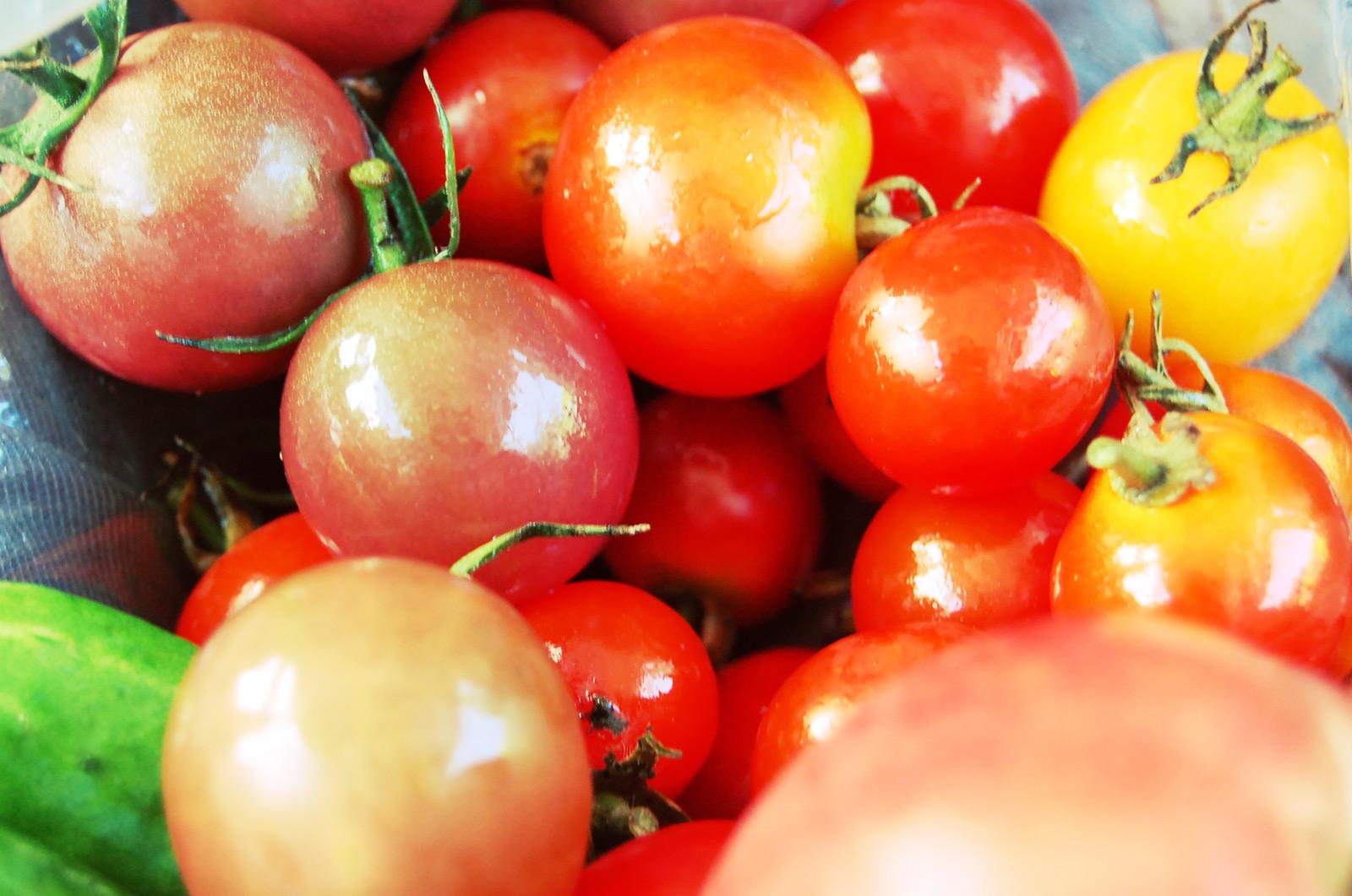 美味しいトマトを食べるための収穫の時期・時間