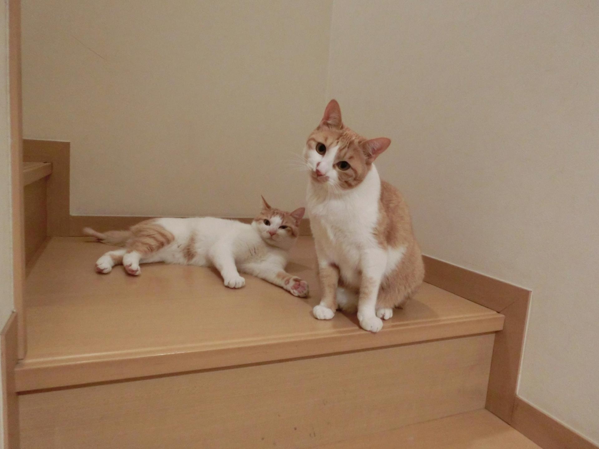 猫アレルギーの検査~まずは病院で調べてから対策を!!