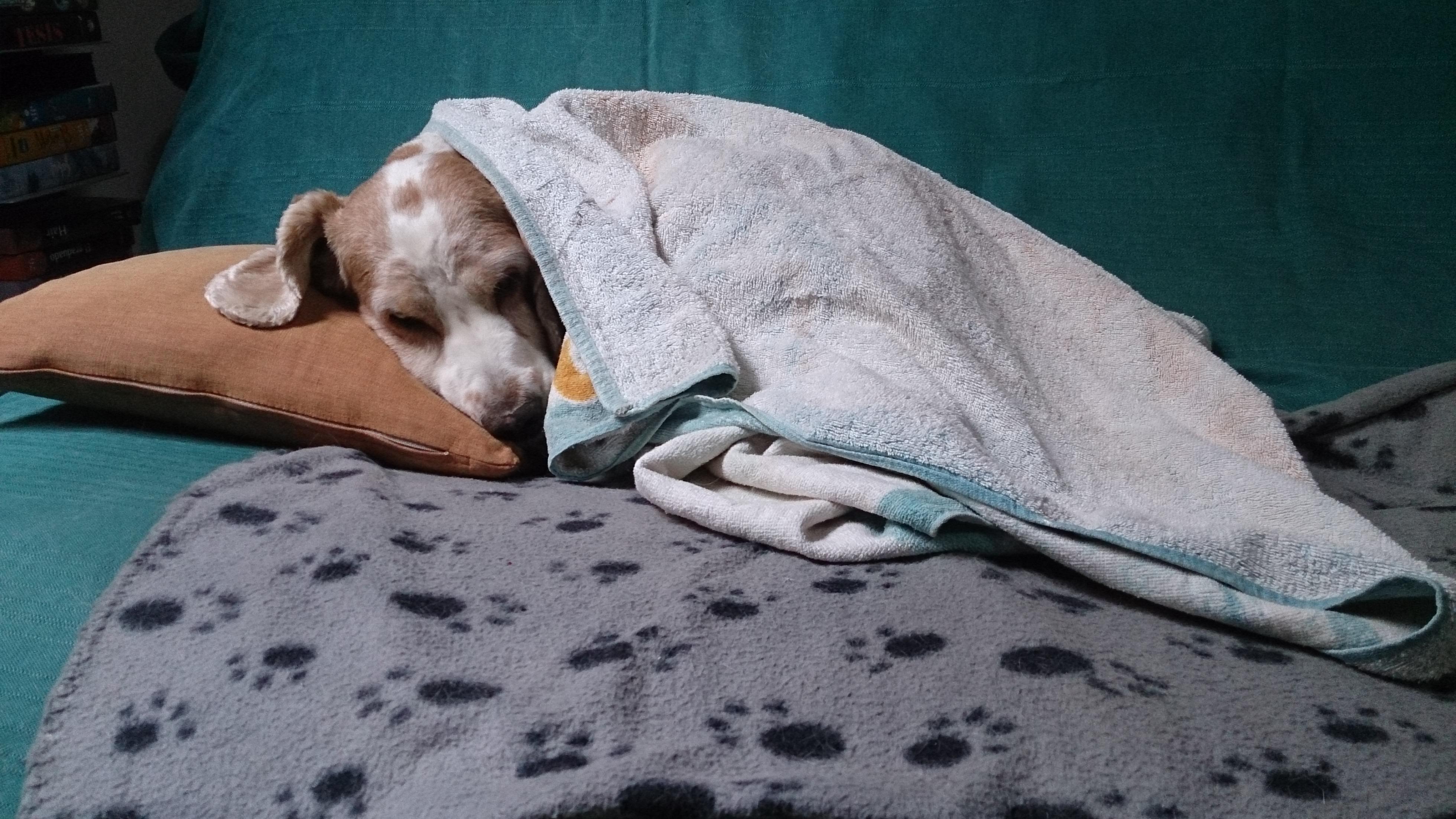 犬が病気になったら仕事は休む?休まない?