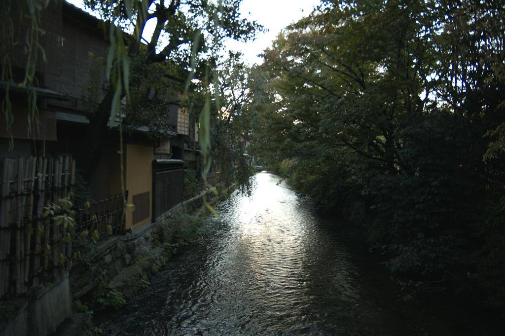 京都市で虫が大量発生!その正体と対策は?